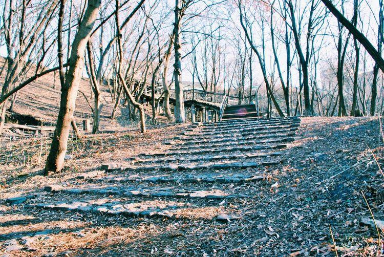 лестница пейзажнаяаллея к элитному кварталу