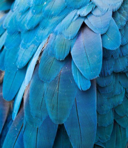 Full frame shot of blue bird