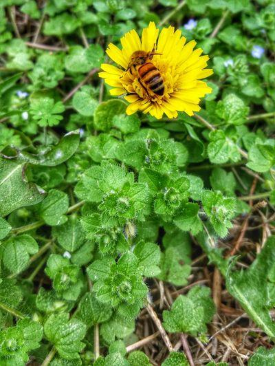 Bee Bumblebee