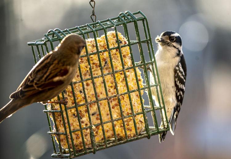 Birds and suet