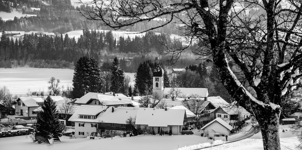High angle view of snow covered trees and buildings
