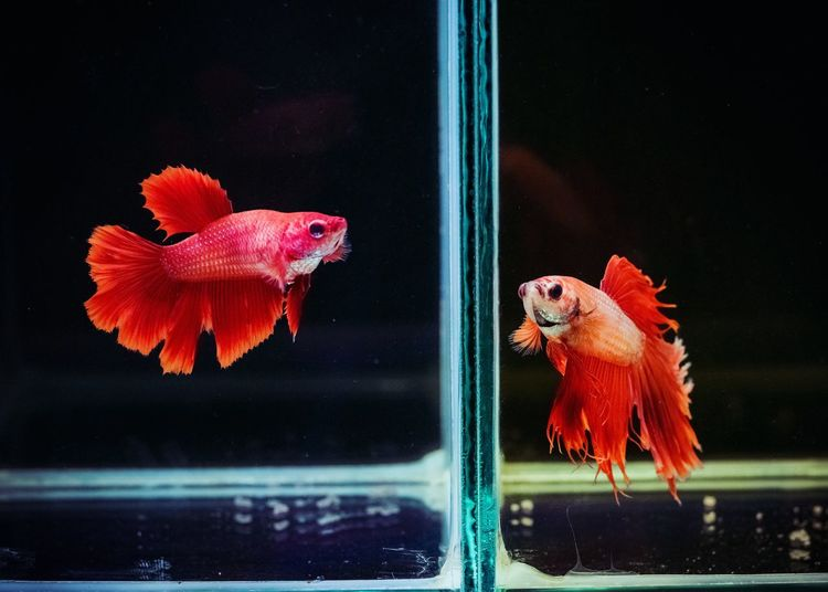 View of fish in tank