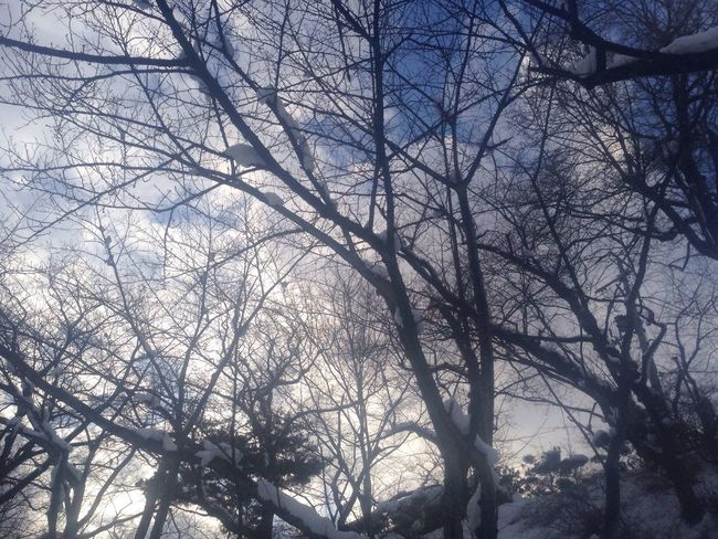 IPhone IPhoneography Mobilephotography The Purist (no Edit, No Filter) Tree Nature Sky EyeEm Nature Lover Bare Tree Low Angle View Branch No People Beauty In Nature Park Snow ❄ Backgrounds Outdoors Day
