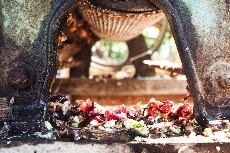 Close-up of coffee cherries