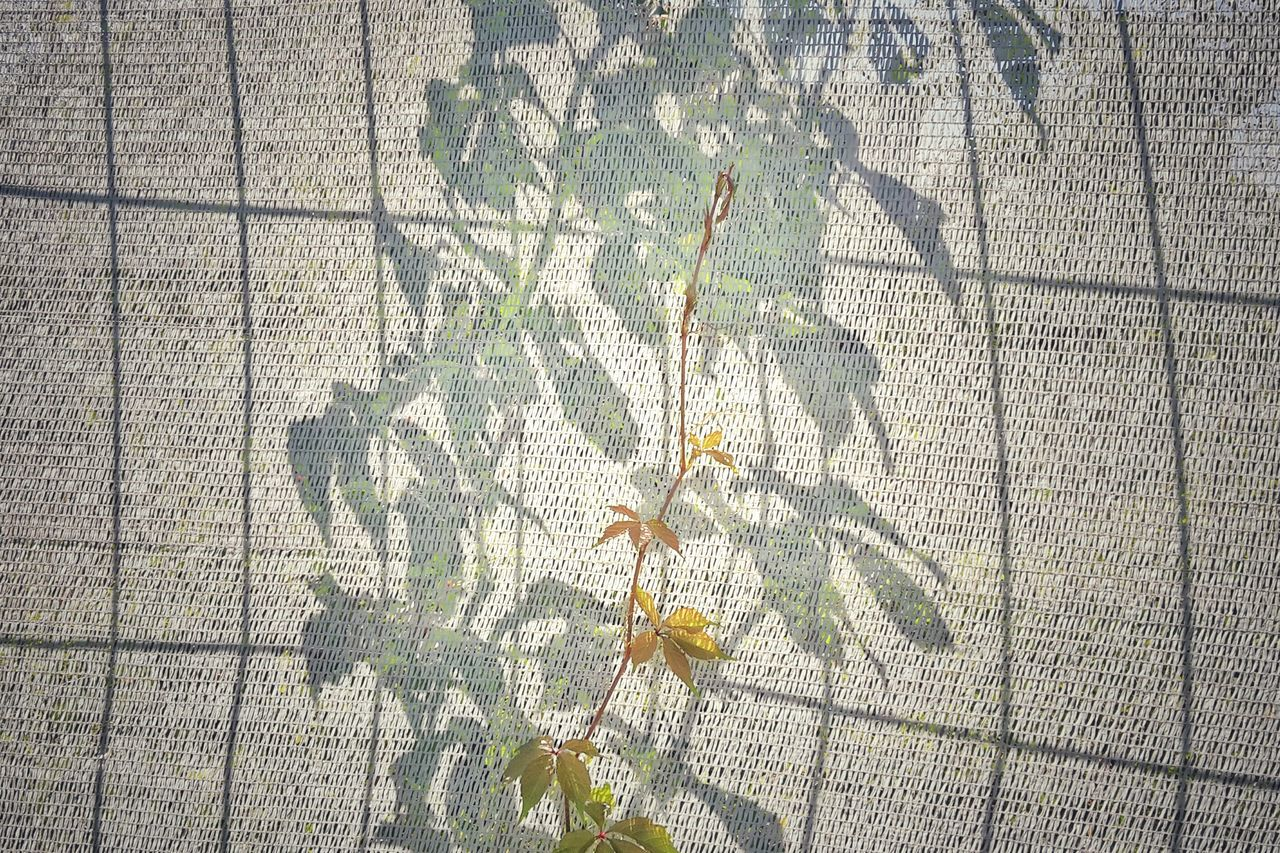 Close-up of autumn plant against shadow on textured fabric