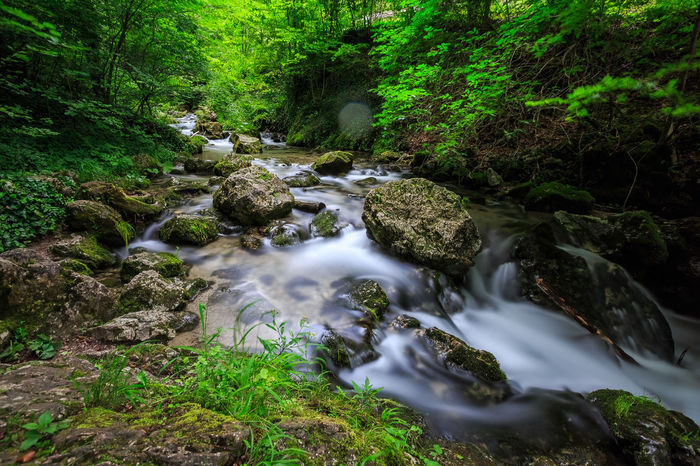 Myrafälle @ Austria 🇦🇹 Beauty In Nature Blurred Motion Day Flowing Water Forest Growth Long Exposure Moss Motion Myrafällle Nature No People Outdoors Rock - Object Scenics Stream Tranquil Scene Tranquility Tree Water Waterfall