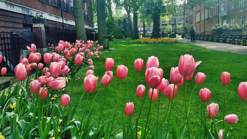 🌷 Flowers 🌹 Mayfair, London Trip Travel Photography Mobilephotography Power In Nature Enjoying Life Check This Out Beauty In Nature Hello World