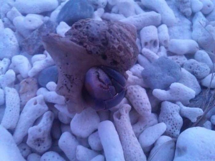 Sea Shells 🐚 阿嘉島 Okinawa Beach