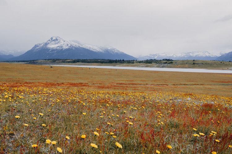 Landscape Argentina Plant Flowers Mountain Sky Landscape Clouds Sunset