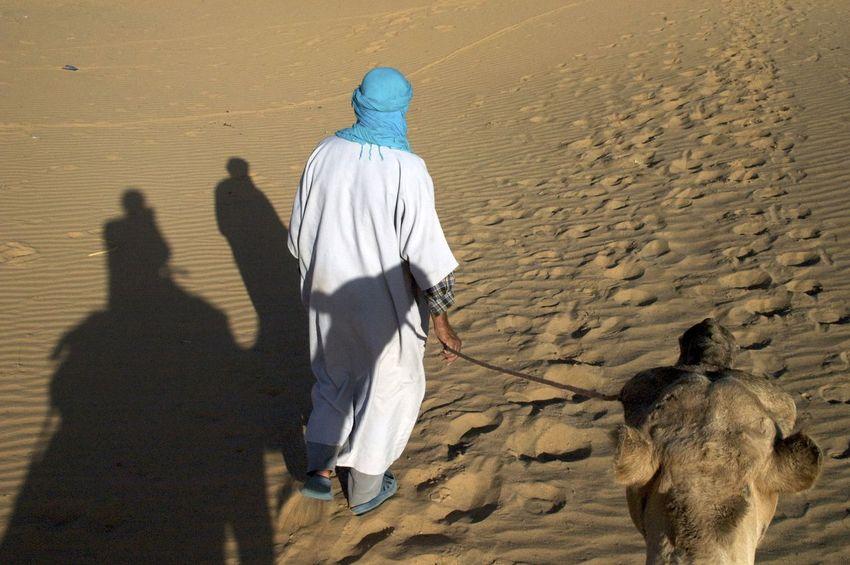 Camel trip into the Sahara desert in Merzouga, Morocco. Desert Morocco MoroccoTrip Sahara Desert Arid Climate Camel Camel Riding Camel Trip Land Merzouga Outdoors Rear View Sahara Sand Sand Dune Walking
