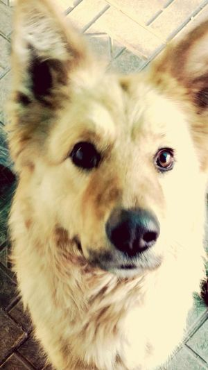 Loyalty. Dog Sight Nature Eyes Friend