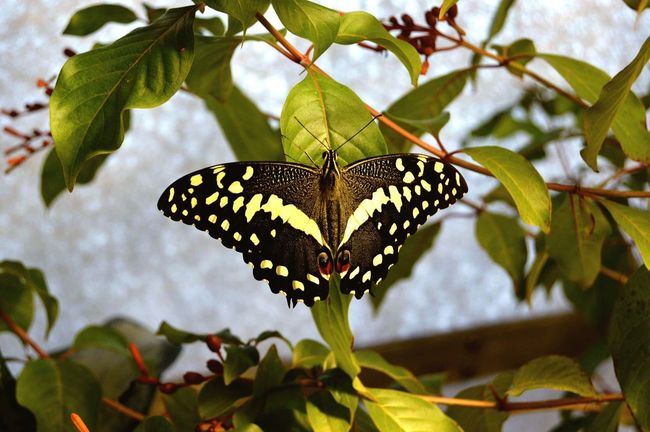 Butterfly - Insect Animal Themes Insect Leaf One Animal Butterfly Day No People Animal Wildlife Outdoors Animal Markings Nature Close-up Plant Beauty In Nature Fragility