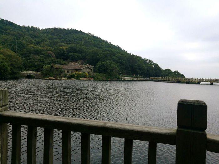 Lake Water Tree