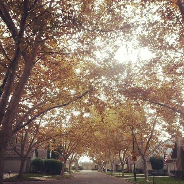 Autumn is my favorite. Fall Californialiving Autumn