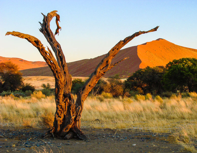 Scenics Nature Sand Dune Landscape Sand Tranquility Beauty In Nature Tree Desert Remote Arid Climate Namib Dunes Dry Arid Landscape Namib Desert Namibia Tranquil Scene Morning Light Tree Trunk Dead Plant Bare Tree The Great Outdoors - 2016 EyeEm Awards The Great Outdoors With Adobe