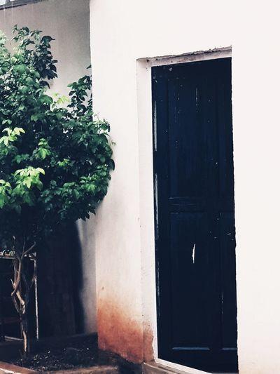 door Tree Door Built Structure Architecture Entrance Whitewashed Doorway Gate Front Door The Great Outdoors - 2018 EyeEm Awards The Still Life Photographer - 2018 EyeEm Awards