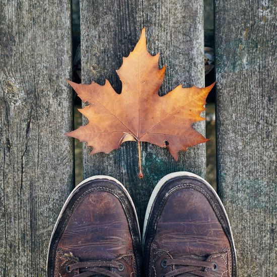 Low section of person standing by autumn leaf on wooden floor