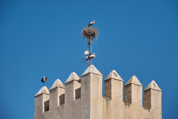 Low angle view of the stork standing on the wall against the blue sky
