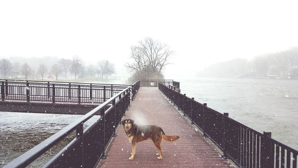 Dogs Fox River Appleton Snow Riverwalk Winter