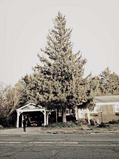 Next years Christmas tree