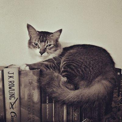 Instamood Instagood Cat Catlovers Harrypotter HP Kahlo Agaz Kazi Tahsin Instadhaka Instadaily Dhaka Bangladesh