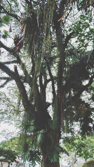 Nature Popular Photos Taubaté Hugging A Tree