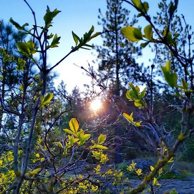 Early Sunrise Run on TubbsHill Trailrunning GetOutAndLive Enjoythelittlethings MakeItHappen Northwest Upperleftusa