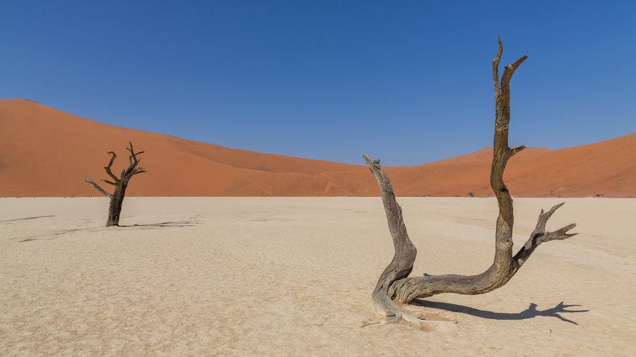 Drift wood on sand against clear sky