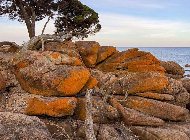 Orange Rocky Seascape Seascape Rock Formation Rock Coastal Rock Coast Line  Australia Bunker Bay Western Australia Australia & Travel Secluded Beach Indian Ocean Coastal Nature Ocean Water Sea Beach Bay Ocean View (null)Orange Rock Orange Lichen Lichen Orange Peaceful Place