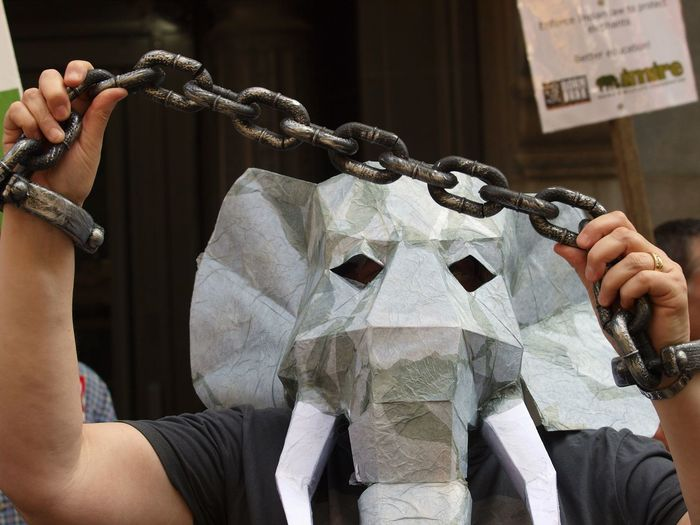 Man wearing elephant mask while holding metal chain