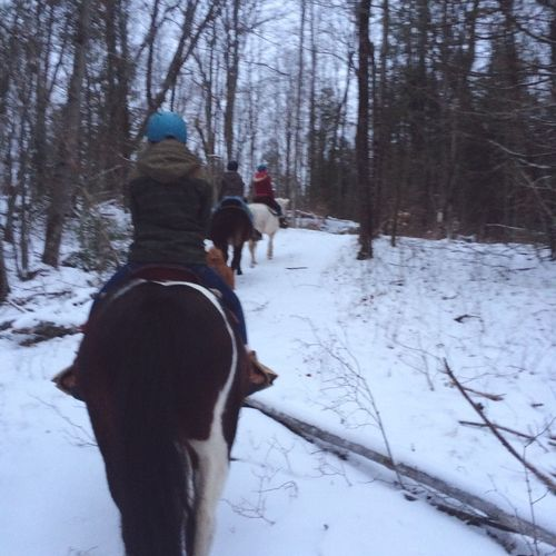 Not the greatest picture but it was hard to keep my phone steady while on a horse Trail Ride Barn Staff Horses