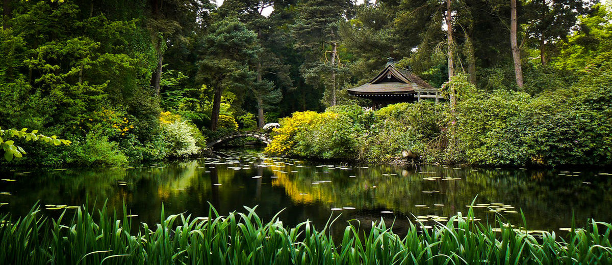 Zen Garden,Japanese, Plants, Water, Lake