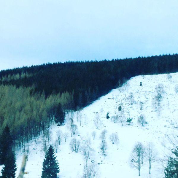 Vosges Foret Montagne Forest Montains