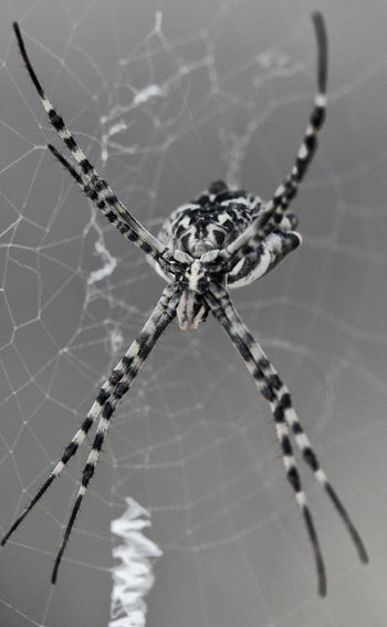 Animal Themes Arachnid Argiope Close-up Hunter Insect Legs Macro Nature Predator Spider Spider Web Web Wildlife