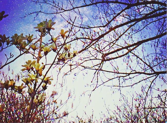 Pixlr Flowers Depressing Days