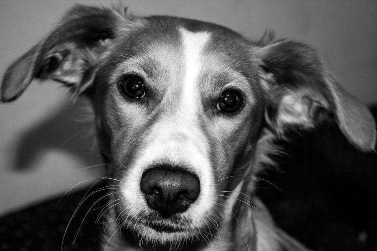 Baby Girl. #portugal #doglover #babygirl #love Beagle Animal Nose Animal Ear Animal Head  At Home Animal Face