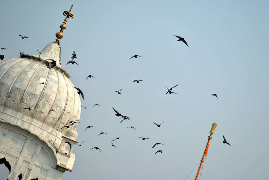 Flocks of birds flying across the dome of a Gurudwara in New Delhi. Animal Themes Architecture Bird Blue Sky Built Structure Day Dome Flock Of Birds Flying Gurudwara In Large Group Of Animals Marble Stone Monument New Delhi No People Outdoors Pigeon Religion Religious Architecture Sikh Sikh Temple Sky Spread Wings Statue Adapted To The City Go Higher