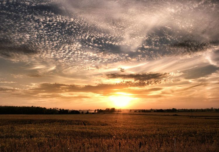 Agriculture Sunset Field Rural Scene Crop  Dramatic Sky Cloud - Sky Tranquil Scene Tranquility Gold Colored Scenics No People Landscape Outdoors Sunlight Colour Your Horizn Nature Beauty In Nature Ontario, Canada #FREIHEITBERLIN Autumn Mood