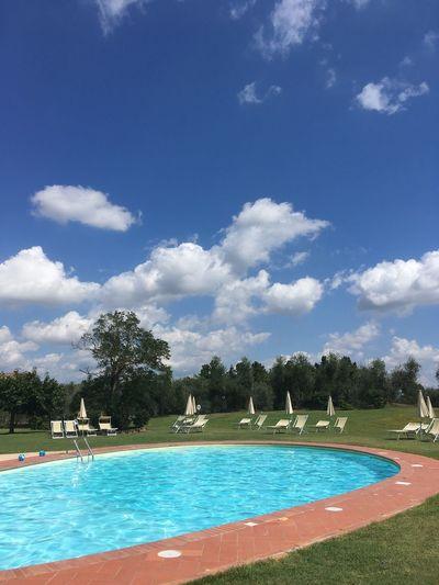 Plant Tree Sky Swimming Pool Pool Cloud - Sky Nature