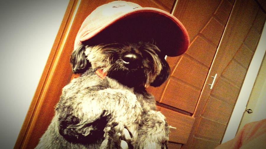 Animal Photography Pet Photography  Perrito DogLove Cute Pets Adorable Amo A Mi Perro  Perros Con Encanto Mi Lindo Perritoo;)