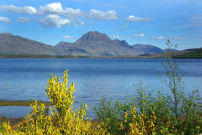 View of Slioch Beauty In Nature Broom Climbing Day Fishing Flower Growth Lake Landscape Loch  Loch Maree Mountain Nature No People Outdoors Plant Scenics Sky Slioch Torridon Mountains Tranquil Scene Tranquility Walking Water