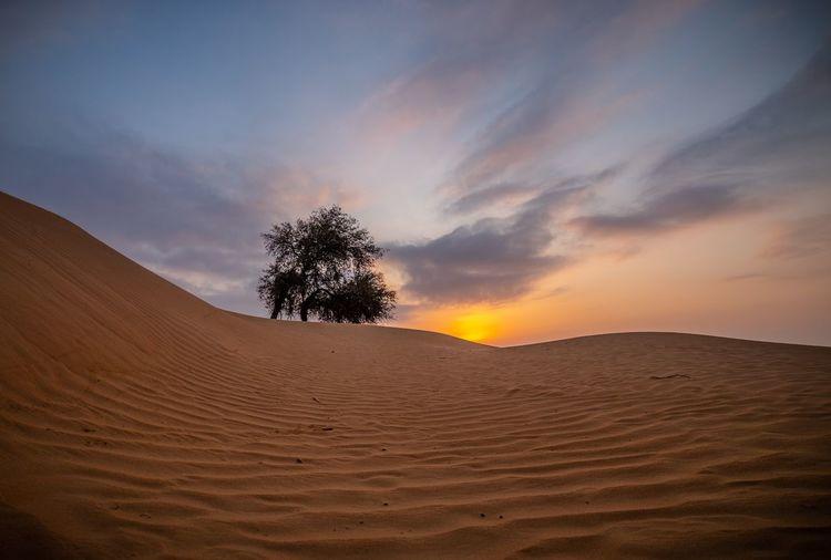 Landscape Scenics - Nature Environment Tree Sky Land Sunset Desert Sand Non-urban Scene Nature No People Cloud - Sky