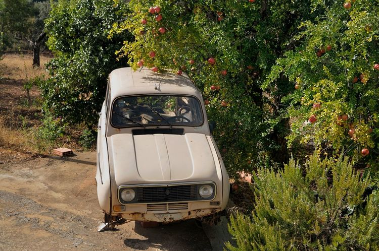 Car Country Lifestyle Day Derelict & Abandoned Land Vehicle Mode Of Transport Motor Home No People Orange Trees Outdoors Renault 4 Rustic Charm Stationary Transportation Tree