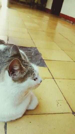 :3 Neko Gato Cat