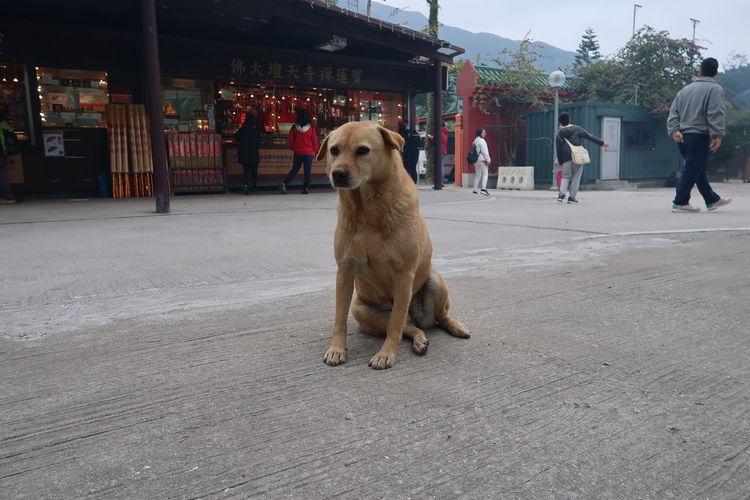 Day City Dog
