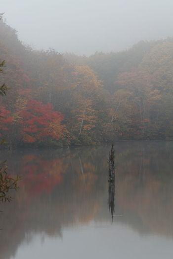 平日朝の鏡池😆カメラマンがいっぱい😲 Water Reflection Nature Lake Landscape Beauty In Natureおはよう😆