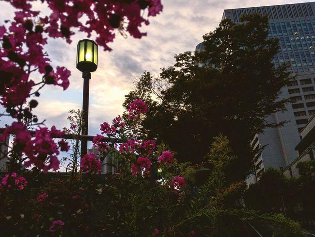 Building Exterior Sky Street Light Pink Color Twilight After The Rain