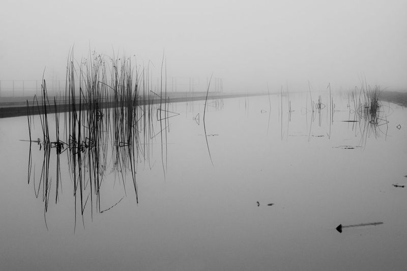 linien im nebel Awareness Beautiful Nature Black And White Foggy Getting Inspired Gloomy Grass Growing Mist Monochrome Mystery Nature No People Plant Reflection Silent Moment Simple Simplicity Tranquil Scene Tranquility Wabi-sabi Water Water Reflections Weather