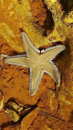 Seastar No People Close-up Day Adriatic Sea 2016...