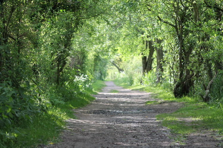 Footpath leading to forest